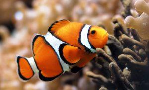 Business aquarium floride